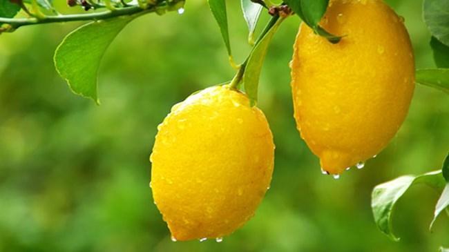 İstanbul da zam şampiyonu limon