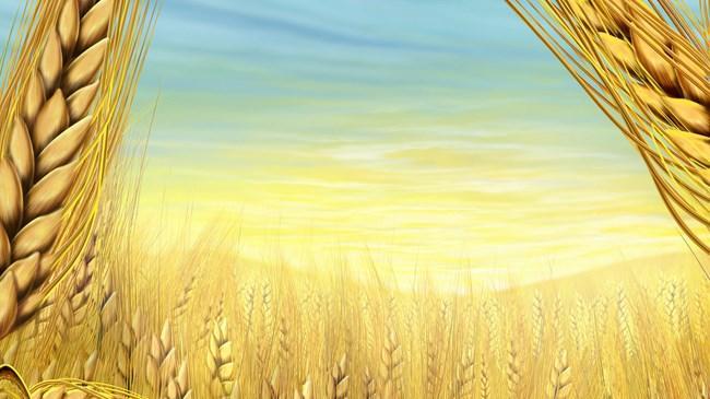 Bitkisel üretim miktarının tahıldaki büyümeye bağlı yüzde 7 nin üzerinde artması bekleniyor
