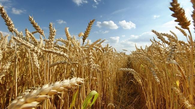 Tarım ÜFE ocak ayında arttı | Ekonomi Haberleri