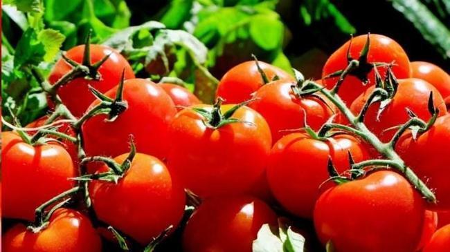 Kasımda en fazla domatesin fiyatı arttı | Ekonomi Haberleri
