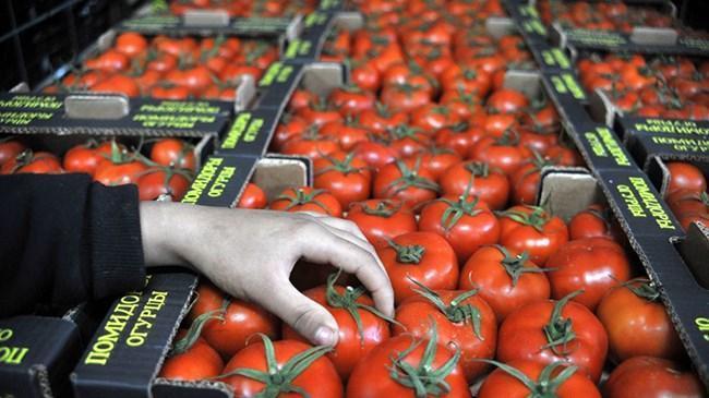 Rusya'ya domates ihracatı yüzde 186 arttı | Ekonomi Haberleri