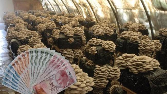 Hibe desteğiyle aylık 5 bin lira gelirli iş kurdu    Teşvik Haberleri