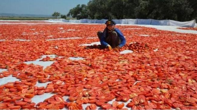 Kuru domates ihracatında hedef 100 milyon dolar    Kobi Haberleri