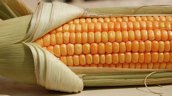 Dolar düşüyor, mısır değer kazanıyor   Emtia Haberleri