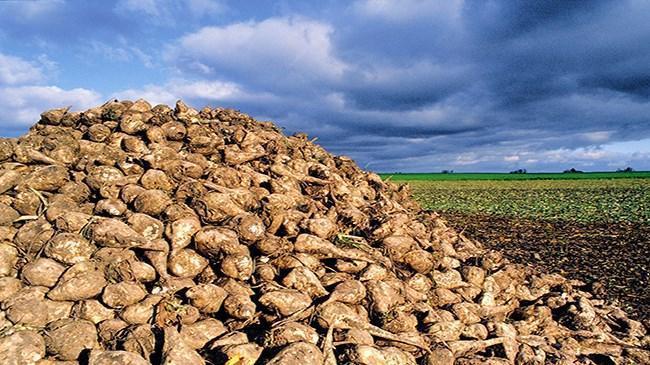 Muş'ta şeker pancarından beklenen gelir açıklandı | Sektör Haberleri