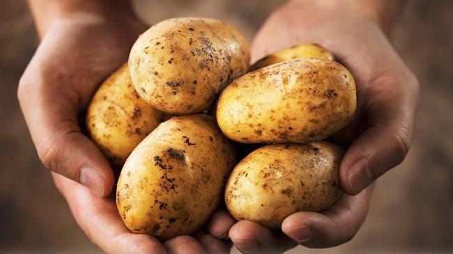 Niksar patatesinde fiyat üreticiyi sevindirdi | Sektör Haberleri