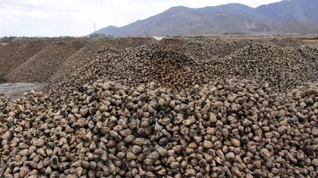 Kars Şeker Fabrikası pancar alımına başladı | Sektör Haberleri