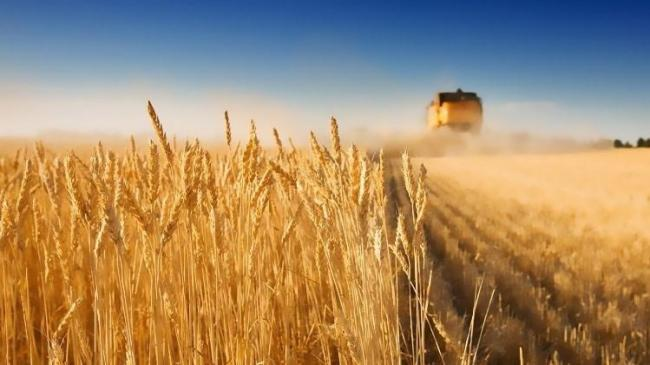 Yağışlar Antalya çiftçisinin yüzünü güldürdü | Sektör Haberleri